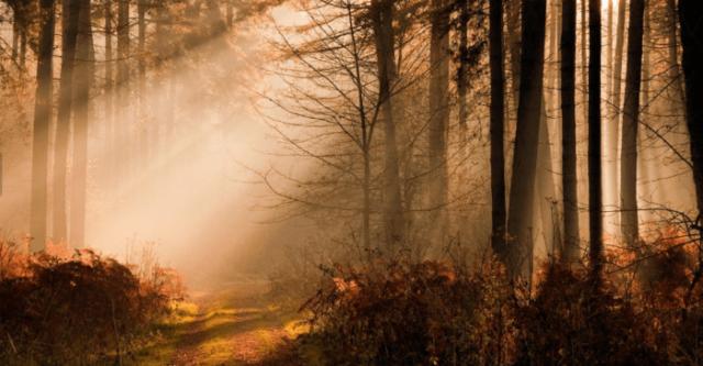 Hutan Lindung